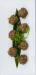 Beef meatballs2